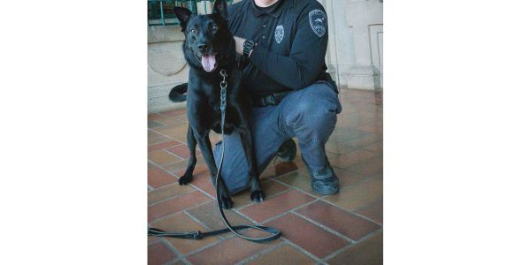 K-9 Bolowas recently diagnosed with cancer and it spread rapidly.Bolo's career accomplishments...