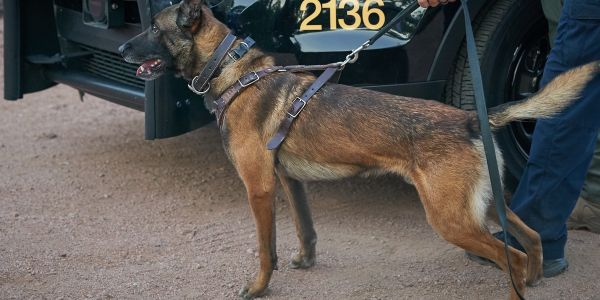 Officers with the El Mirage (AZ) Police Department are mourning the loss of K-9 Koki after he...