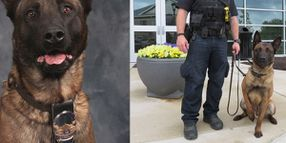 Indiana K-9 Killed While Tracking 2 Suspects Following Vehicle Pursuit