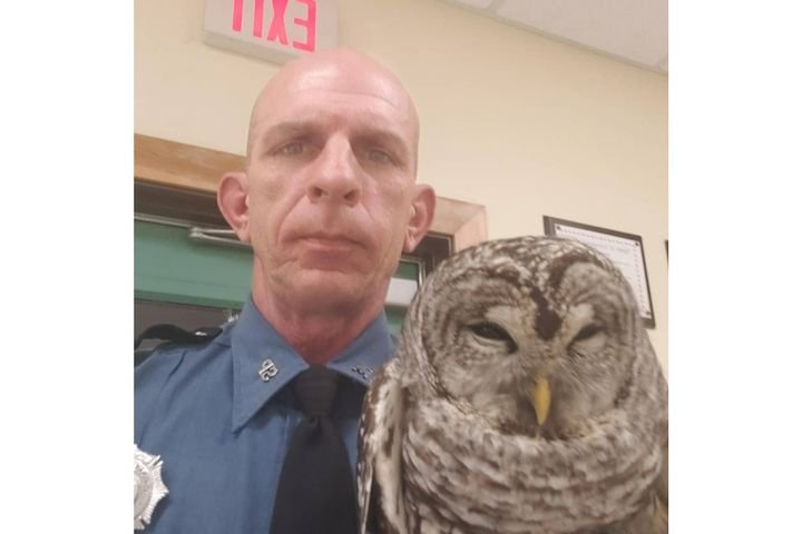 Trooper Sam Tlumac rescued this owl from the middle of a rural road. The bird later flew off into nearby trees.  - Image courtesy of Maine State Police / Facebook.