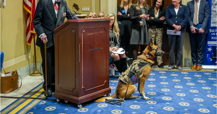 Marine K-9 Bass was honored last week with the Animals in War & Peace Medal of Bravery.
