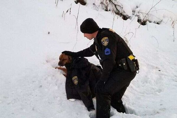 Sgt. Chris Howlett comforted Rogue the dog after she was hit by a car. - Photo: Chautauqua County (NY) Sheriff's Office