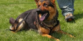 Missouri Department Mourns Loss of K-9