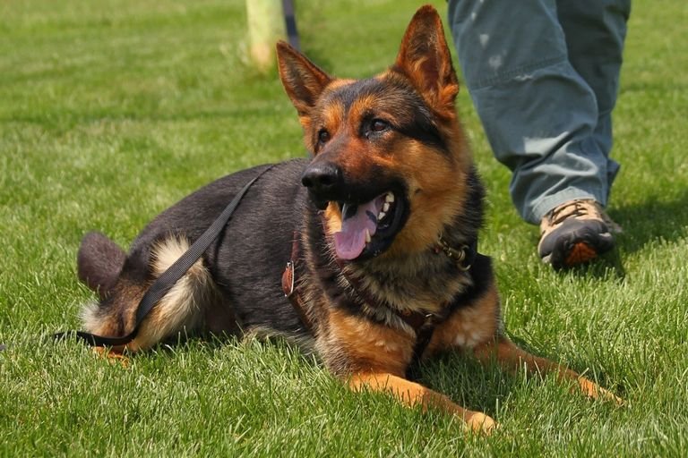 Officers with the Eureka (MO) Police Department are mourning the loss of K-9 Reno, who was...