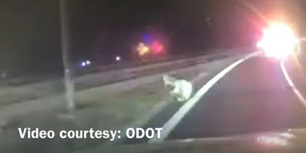 Officer James Tripp was attacked by a coyote while assisting with traffic control.