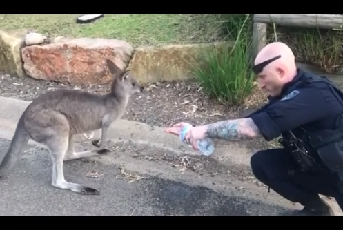 Video: Australian Officer Gives Water to Thirsty Kangaroo in Wildfire