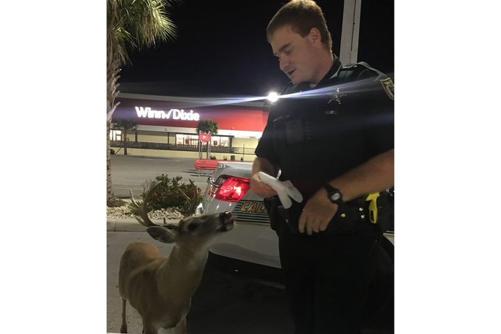 The Monroe County (FL) Sheriff's Office posted an image on social media of an encounter between a deputy and a small male deer. - Image courtesty of Monroe County (FL) Sheriff's Office / Facebook.
