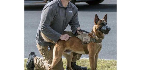 Cullman County, AL, sheriff's deputyAdam Clark was critically injured in a patrol vehicle wreck...