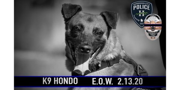 K-9 Hondo was shot and killed during an exchange of gunfire that also left the suspected gunman...
