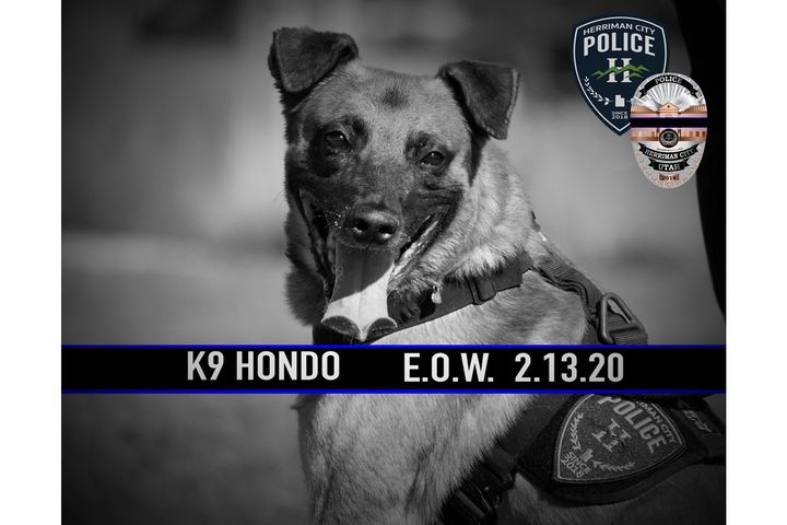 K-9 Hondo was shot and killed during an exchange of gunfire that also left the suspected gunman dead. - Image courtesy of Herriman  PD /Twitter.