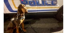 New Jersey K-9 Locates Child Missing for More Than 10 Hours