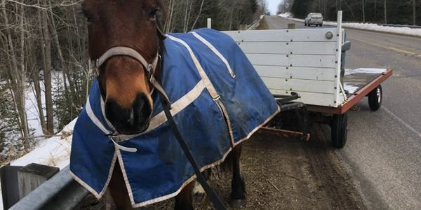 "A trooper with the Michigan State Police ""gave a verbal warning"" to a rider-less horse that had..."