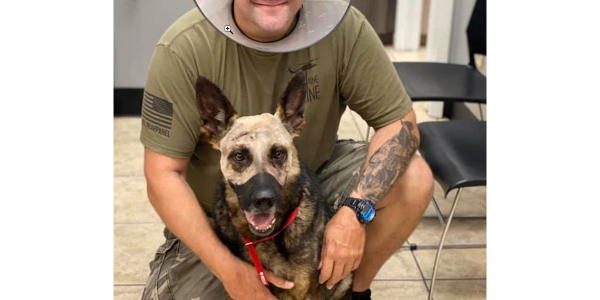 Deputy Scott Cronin and K-9 Vice both suffered knife wounds but are expected to fully recover.