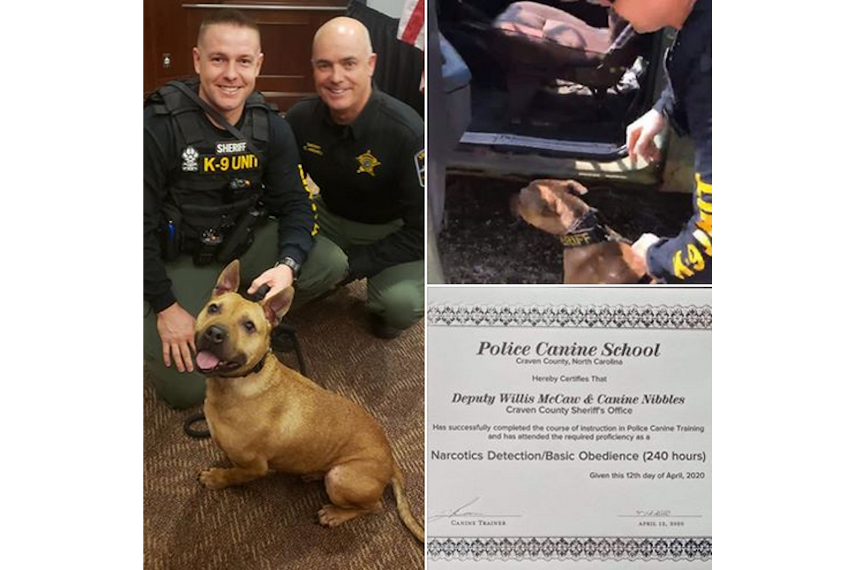 Pit Bull Rescued from Dog Fighters Becomes North Carolina K-9