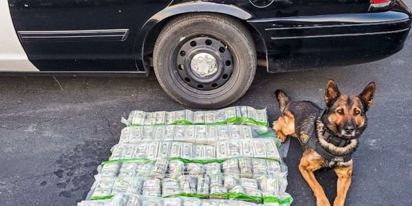 California Highway Patrol K-9 alerted on the cash and officers learned that it was intended for...