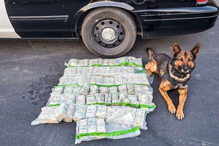 California Highway Patrol K-9 alerted on the cash and officers learned that it was intended for buying marijuana. (Photo: CHP) -