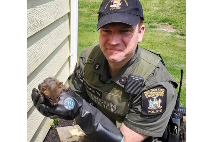 New York Environmental Conservation Police Officer Eric Templeton rescued a young fox. (Photo: NYDEC)  -