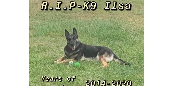 K-9 Ilsa served from 2014 to 2020, working units ranging from Street Crimes and Narcotics & Vice...