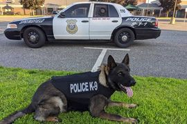 Massachusetts Department Receives Donation of Protective Vests for K-9s