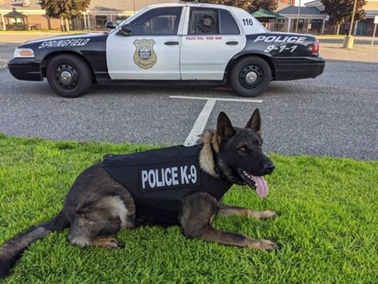 The Springfield (MA) Police Department has received a generous donation from a non-profit organization of a ballistic-resistant and stab-resistant protective vest for a dog in the agency's K-9 unit. - Image courtesy of Springfield PD / Facebook.