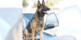 California Officer Whose K-9 Died in Hot Car Will Not Be Charged