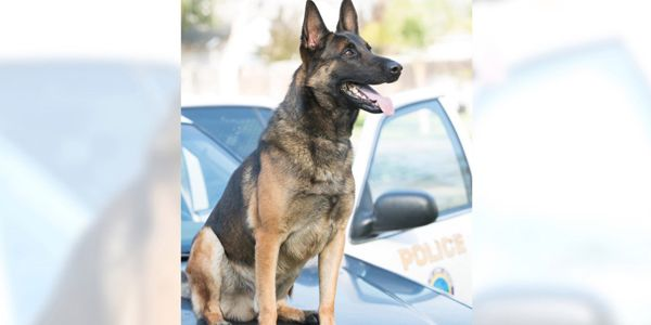 K-9 Ozzy—a drug-detection dog—was found dead in the patrol vehicle by his handler in August 2019.