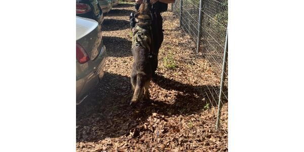 Anderson County (SC) Sheriff's K-9 Roscoe was killed Tuesday night when suspects ambushed...