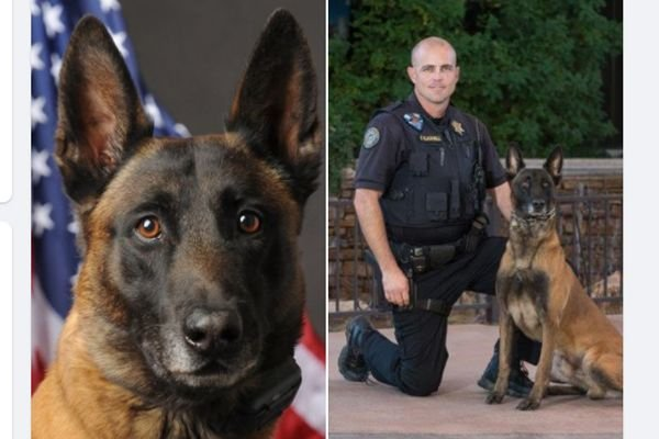 Officers with the Scottsdale (AZ) Police Department are mourning the sudden death of one of it's K-9s after it was diagnosed with a brain tumor. - Image courtesy of Sctottsdale PD / Facebook.