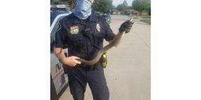 """Texas Officer Dubbed """"Snake Charmer"""" After Rescuing Reptile"""