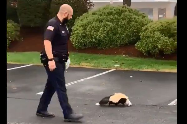 "An officer with the Tewksbury (MA) Police Department managed to rescue a skunk over the weekend whose head was trapped in a plastic food container without being ""skunked."" - Image courtesy of Tewksbury PD / Twitter."