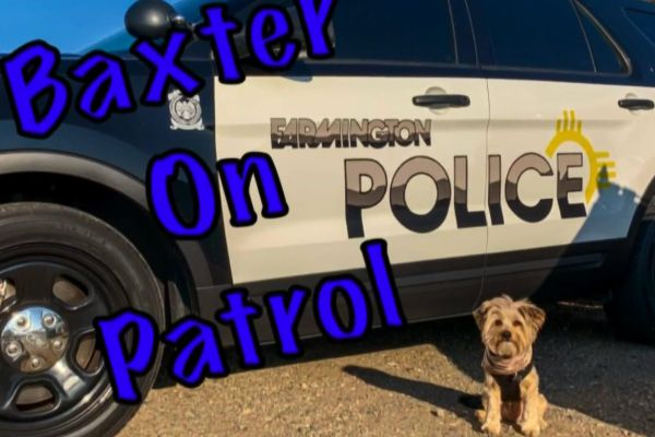 K-9 Baxter is expected to serve in a support role, lifting the spirits of officers and victims of criminal activity. - Image courtesy ofFarming Police (NM) Department / Facebook.
