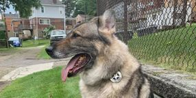 Pittsburgh Officers Mourn Loss of K-9