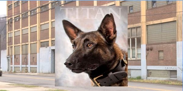 Johnstown, PA, police K-9 Titan was killed Sunday during a warehouse search when he fell down an...