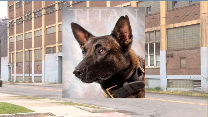 Johnstown, PA, police K-9 Titan was killed Sunday during a warehouse search when he fell down an elevator shaft. (Photo: Screen Shot from WPXI) -
