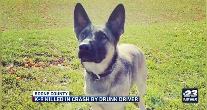 Boone County, IL, sheriff's K-9 Loki was killed Sunday in a crash involving a DUI suspect. (Photo: KWQC Screen Shot) -