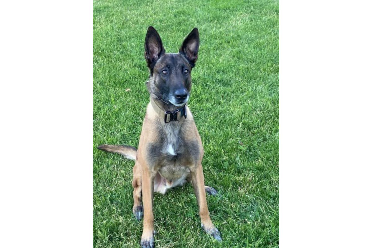 Phoenix K-9 Shot, Credited with Protecting Officers in Deadly Confrontation with Homicide Suspect