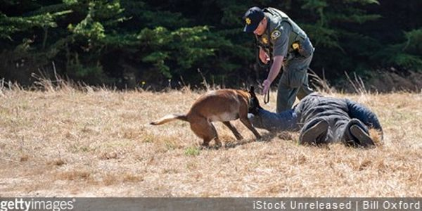 NJ's Attorney General Considering Ban on Using K-9s During Arrests