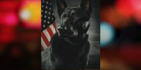 Pursuit of Carjacked Vehicle Ends with MN K-9 Wounded, Suspect Dead