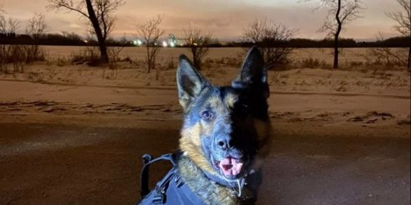 Saskatoon Police Service K-9 Oliver in the vest that may have saved his life. (Photo: Saskatoon...
