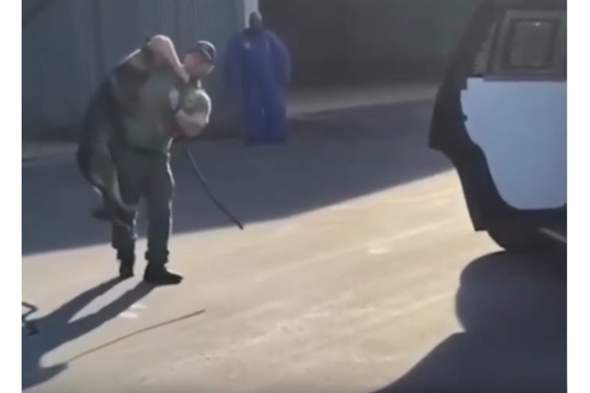 NC Officer Resigns After Investigators of K-9 Training Video Recommend Termination
