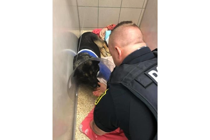 Austell (GA) Police K-9 Jerry Lee was severely wounded last weekend. He will be retired. (Photo: Austell PD/Facebook) -