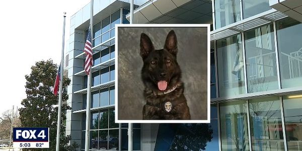 Texas K-9 Dies During Search for Felony Suspects