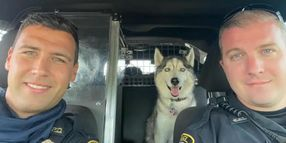 MO Police Rescue Homicide Victim's Dog from Hot Car