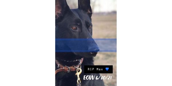 K-9 Max of the St. Joseph (MO) Police Department was killed Wednesday night during arrest of a...