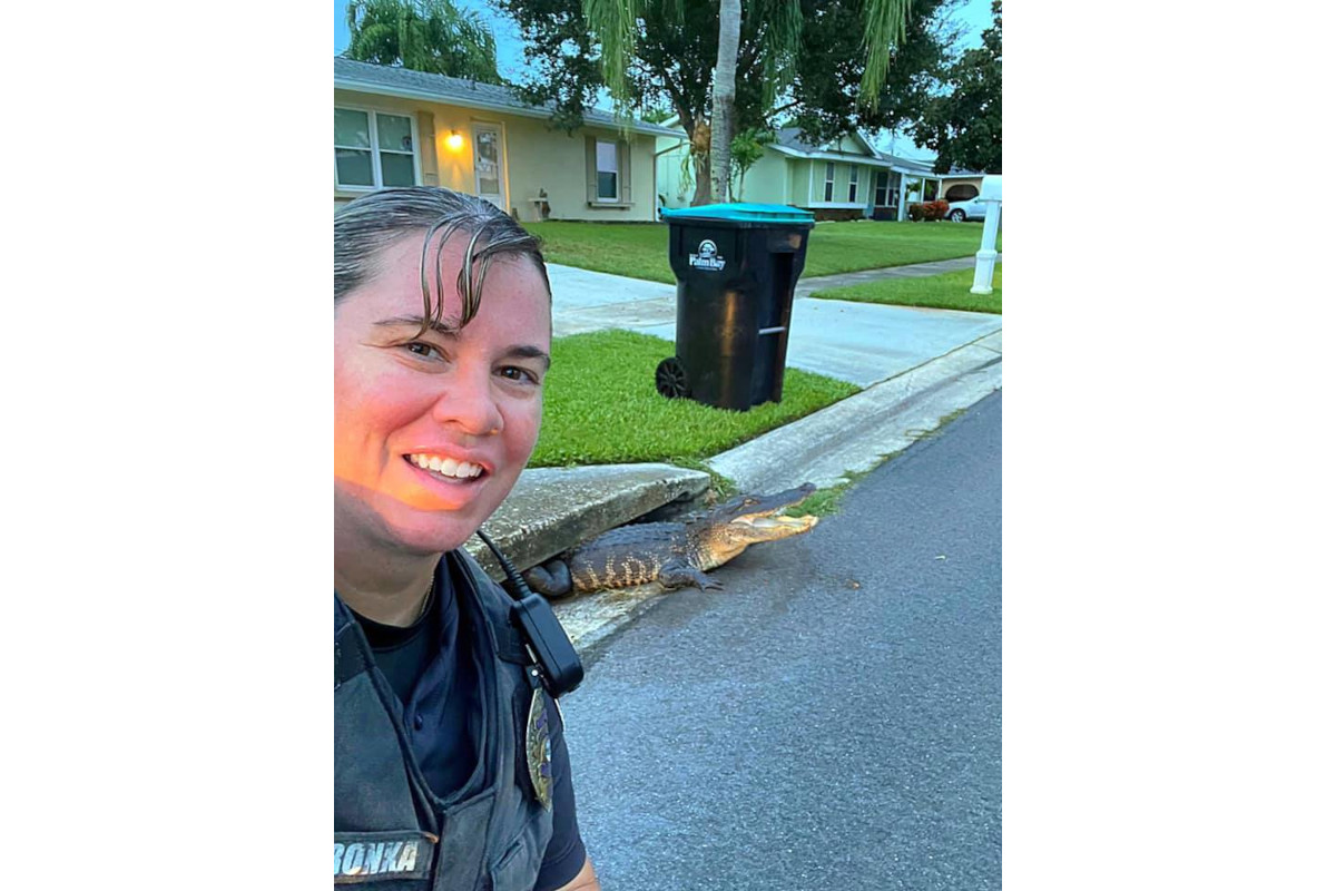 FL Officer Photobombed by Alligator in Storm Drain