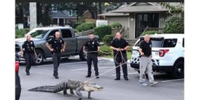 North Carolina Officers Respond to Alligator in Residential Area