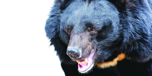 Bears are not a common reason for police calls, but it's a good idea to have a plan for them in...