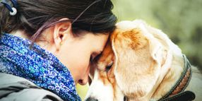 Canines Bring Comfort to Victims