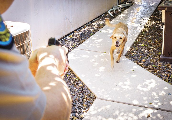 Can Police Stop Killing Dogs?