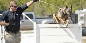 Training: Canine to K-9